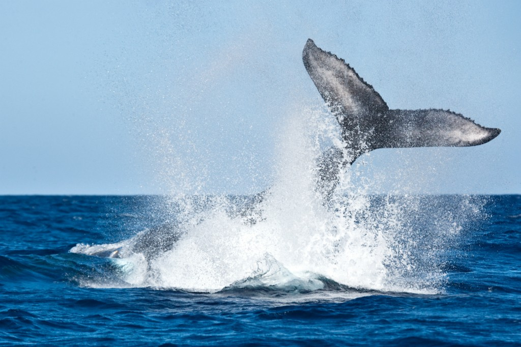 012 Marine Biology Research Paper Topics Whale Phenomenal Large