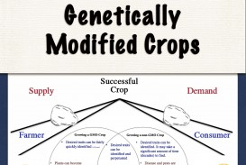 025 Gmo Research Paper Topics Wonderful